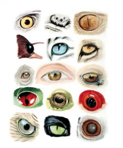 """""""Diversidad de ojos"""" de Carles Puche"""